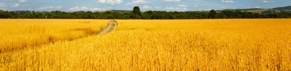 cropped-Wheat-Fields-1920X1200-Wallpaper-1-1.jpg